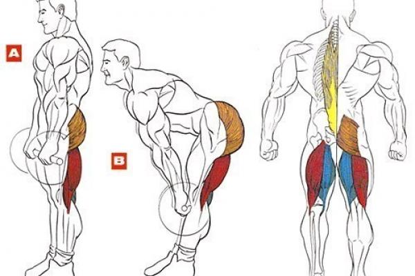 румынская тяга мышцы