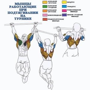 Как накачать спинные мышцы, занимаясь на турнике