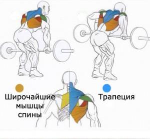 Широчайшая мышца на фото