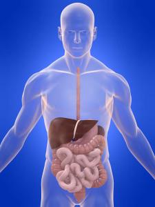 Влияние стероидов на пищеварительную систему
